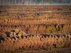 Peat - Love It Or Hate It